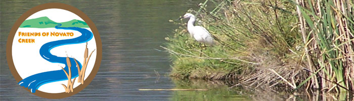 Friends of Novato Creek -- Egret